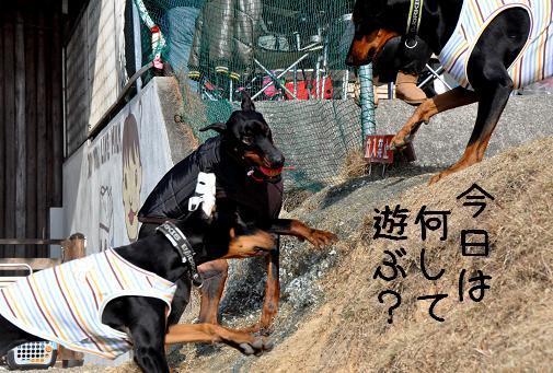 09jan11kotetsu&arlongyukichi