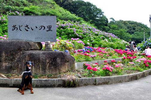 26jun11katahara01