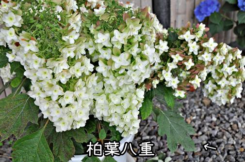 26jun11katahara05