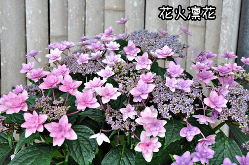 26jun11katahara07
