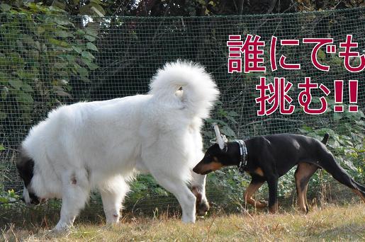 28nov10yukichi04
