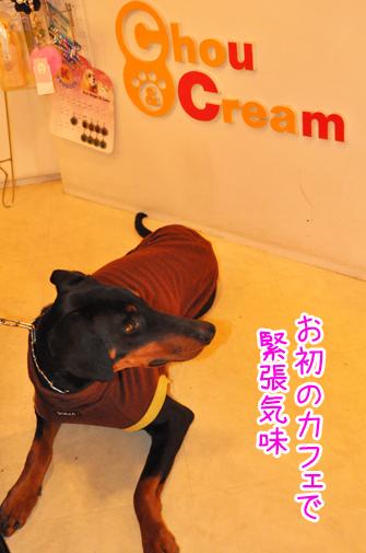 chou&cream01
