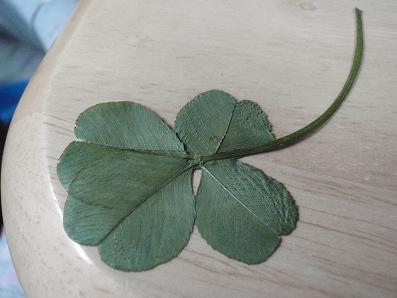 clover01