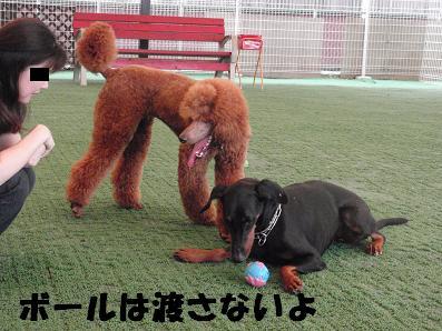dogheart04