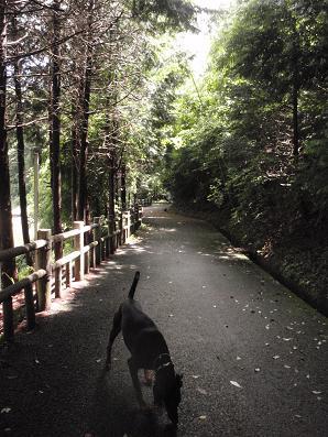 muradumiyamaforest