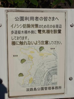 saawaji07