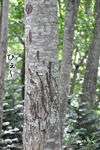 shiretoko201107