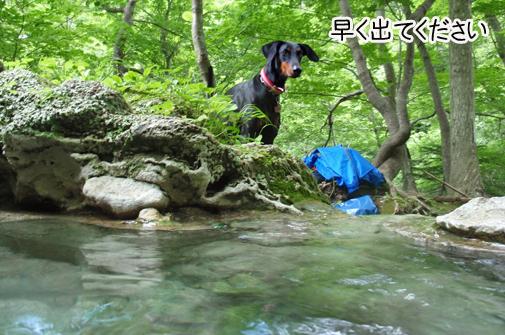 shiretoko201111