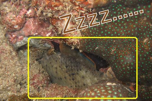 slwwpingfish