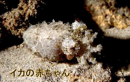 squidbaby02