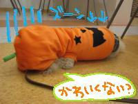 チョコ かぼちゃ