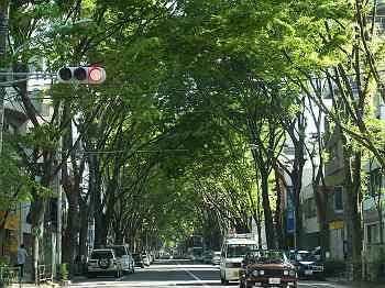 阿佐ヶ谷中杉通り