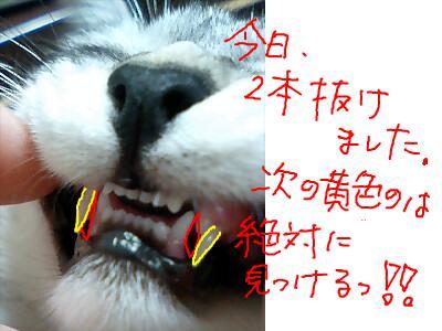 snap_doteko_200985224843.jpg