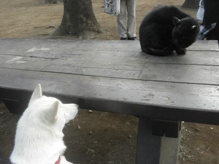 1.29黒猫e