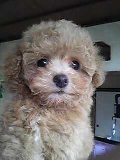 モカの子犬