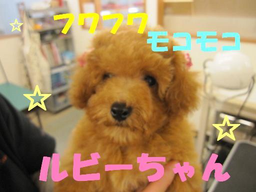 ブログ ルビーちゃん1枚目
