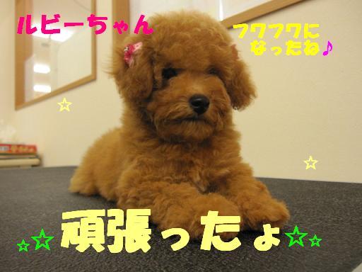 ブログ ルビーちゃん2枚目