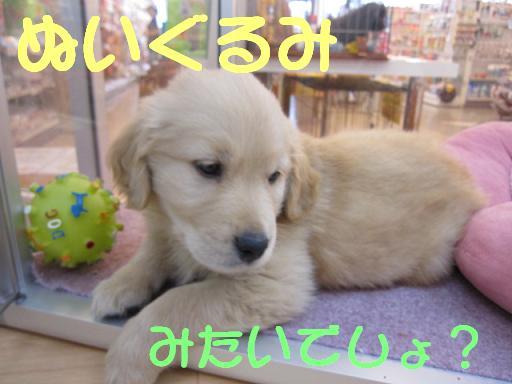 ブログ 24日ゴールデン2