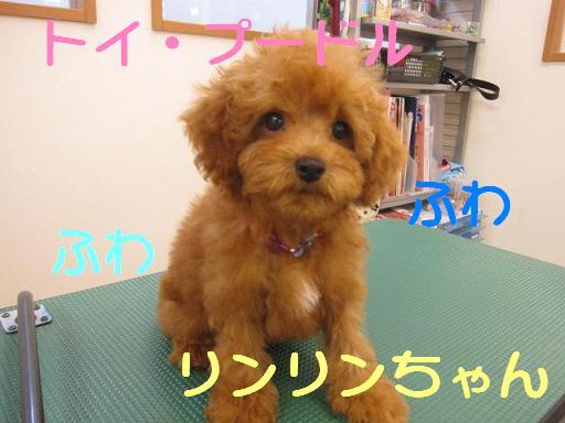 ブログ リンリンちゃん1