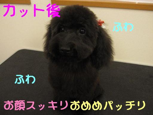 9日 ブログ ピノちゃん2