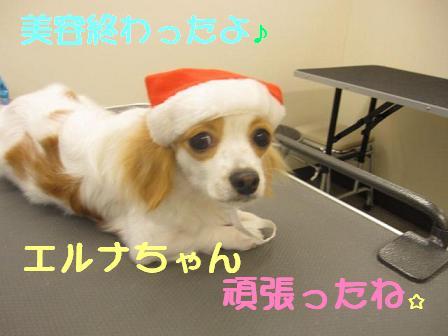 ブログ エルナちゃん2