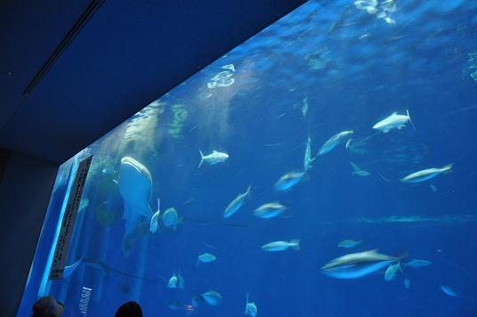 かごしま水族館08-24-09-1