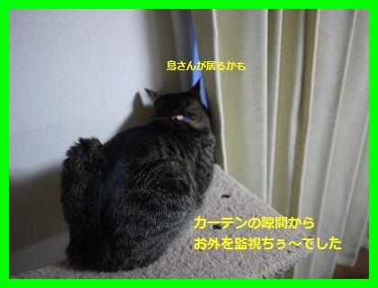 rasuku4[1]