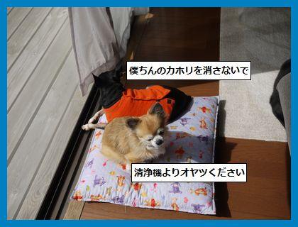 seijyouki 4
