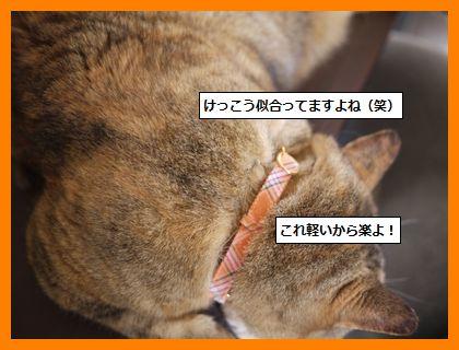 fuda4.jpg