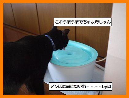 mizunomiki1.jpg