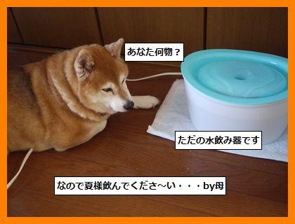 mizunomiki2.jpg