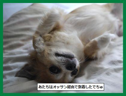 musume1.jpg