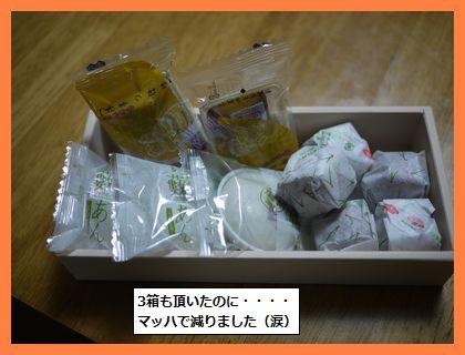 musume4.jpg
