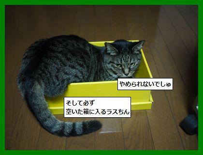 musume5.jpg