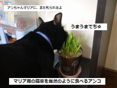 nekoku3.jpg