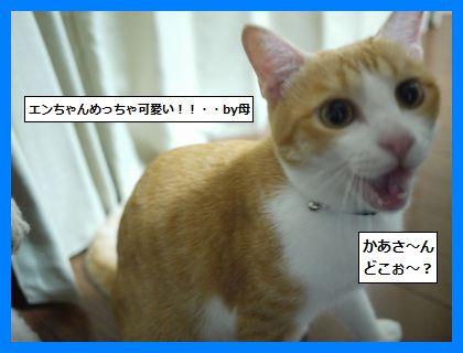 nettku4.jpg