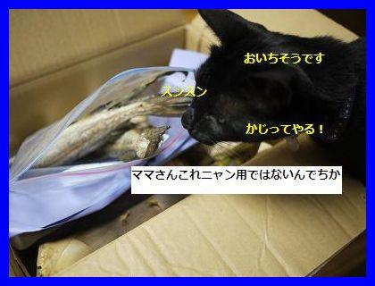 okurimono2.jpg