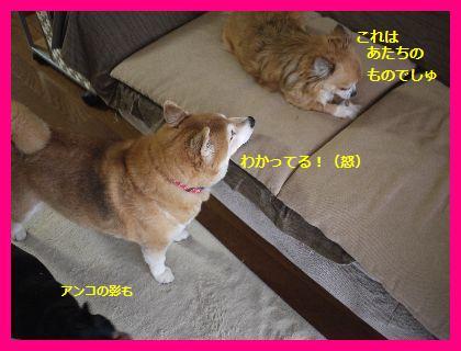 okurimono3.jpg