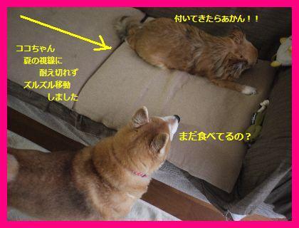 okurimono4.jpg