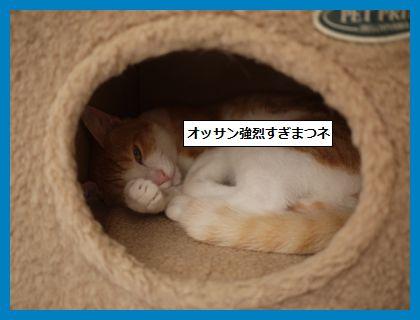 seijyouki3.jpg