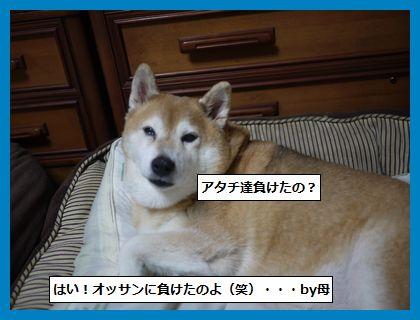 seijyouki5.jpg