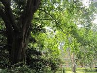 10月 香港公園