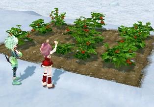 My農場2