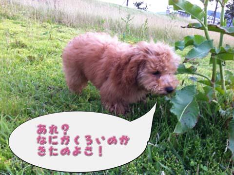 03_20110607094635.jpg