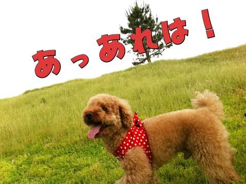 04_20110607094635.jpg