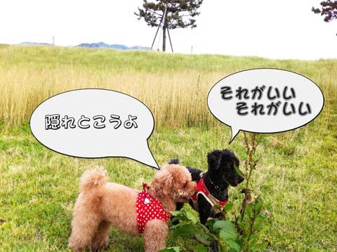 07_20110607094611.jpg