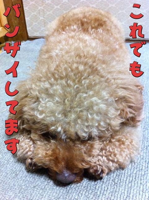 07_20110623002810.jpg