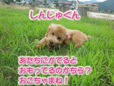 08_20110716173824.jpg