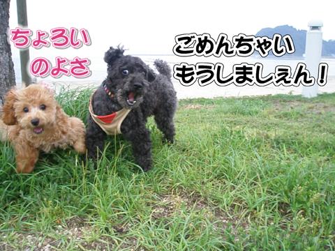 10_20110716173823.jpg