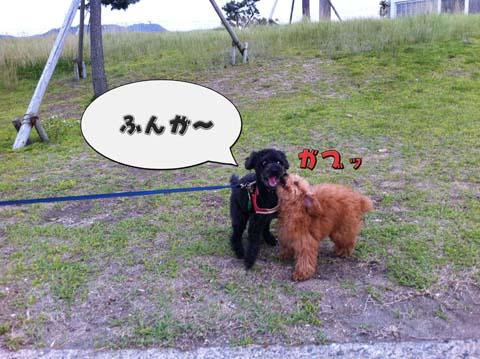 11_20110607094608.jpg